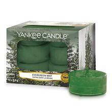 Yankee candle Svíčky čajové Yankee Candle Lesní mlha, 12 ks